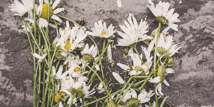 Flowers trampled on the ground