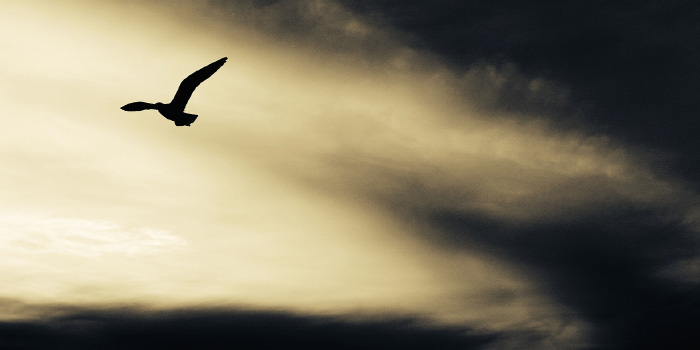 Seagull flying through a dark sky