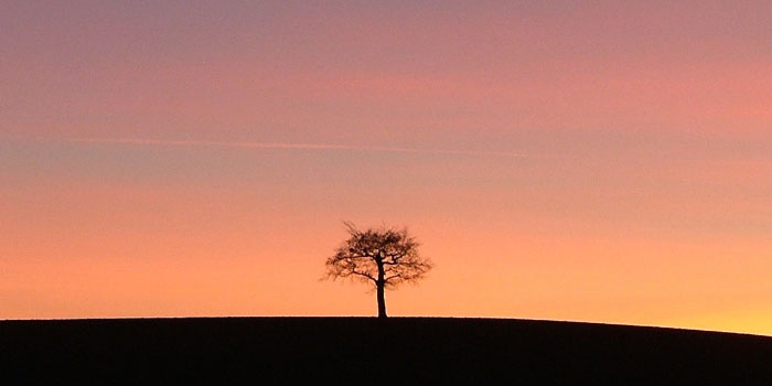 Lone tree sitting on a hilltop during sunset