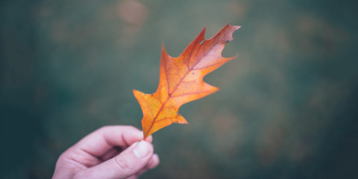 Hand holding a fall leaf