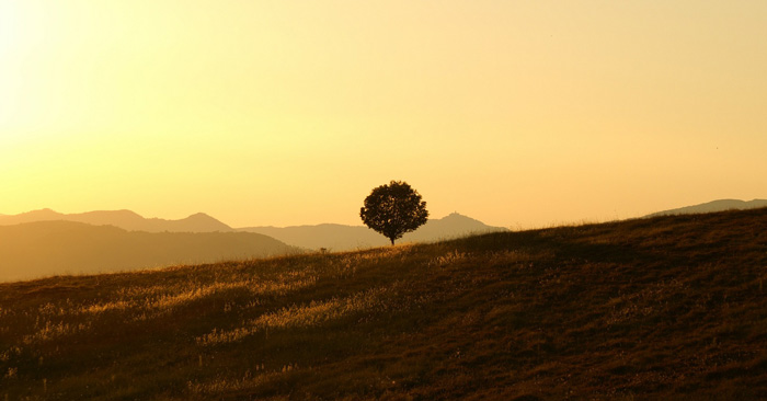 Single tree on a hill during sunrise
