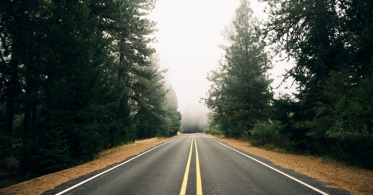 Forest road that goes into fog