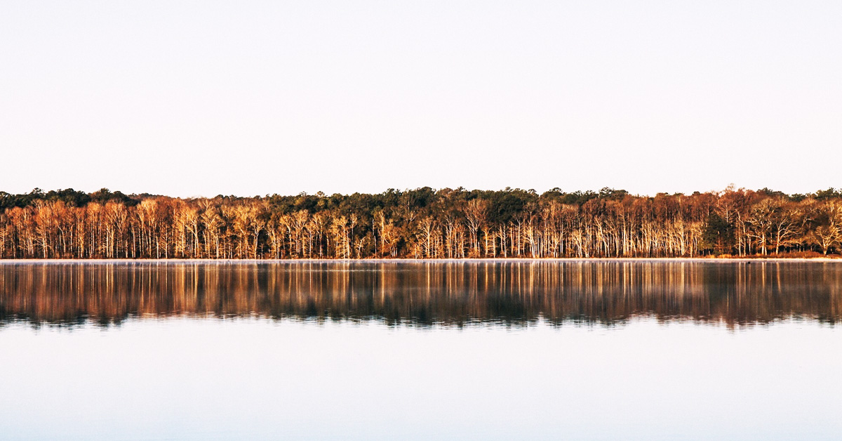 A reflection of trees on still water
