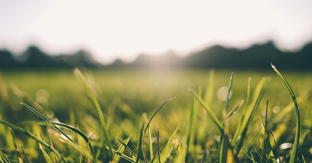 Closeup of grass in the sunlight